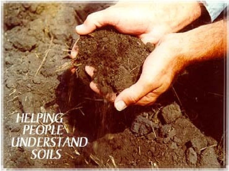 Naturalists at Large: Soil composition