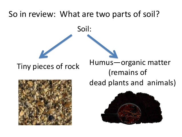 Soil for 3rd or 4th graders teach for Different parts of soil