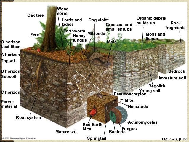Soil notes for Types of soil for kids