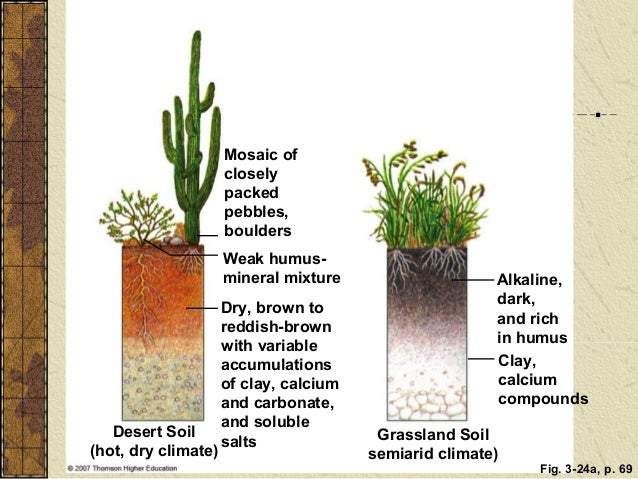 Pics for humus soil definition for kids for What is soil for kids
