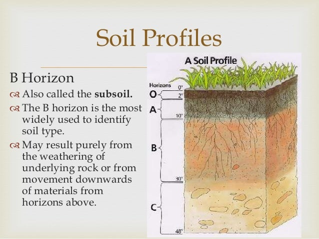 Soils for What does soil contain