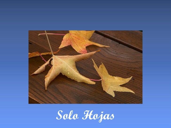 Solo Hojas