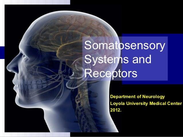Somatosensory sistems and receptors