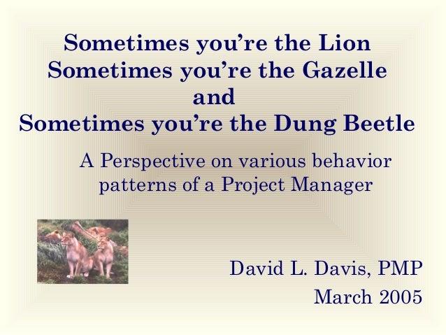 Sometimes you're the Lion Sometimes you're the Gazelle and Sometimes you're the Dung Beetle A Perspective on various behav...