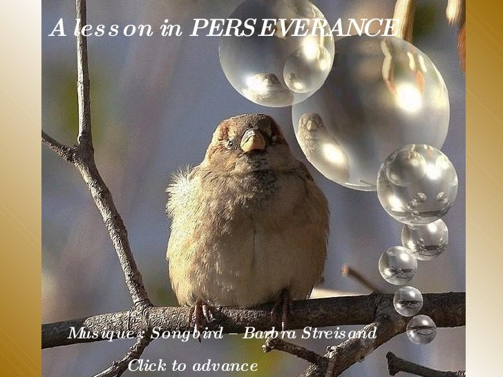 A lesson in PERSEVERANCE Musique : Songbird – Barbra Streisand  Click to advance