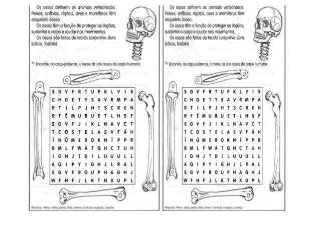 Sopa de letrasesqueleto