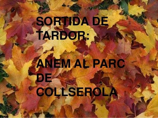 SORTIDA DE  TARDOR:  ANEM AL PARC  por ARGO  DE  COLLSEROLA