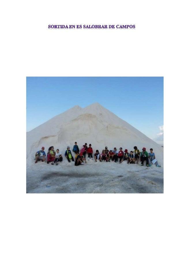 Els nins i nines de la classe anàrem d'excursió al Salobrar de Campos.  Partírem amb l'autobús des de l'escola i allà ens ...