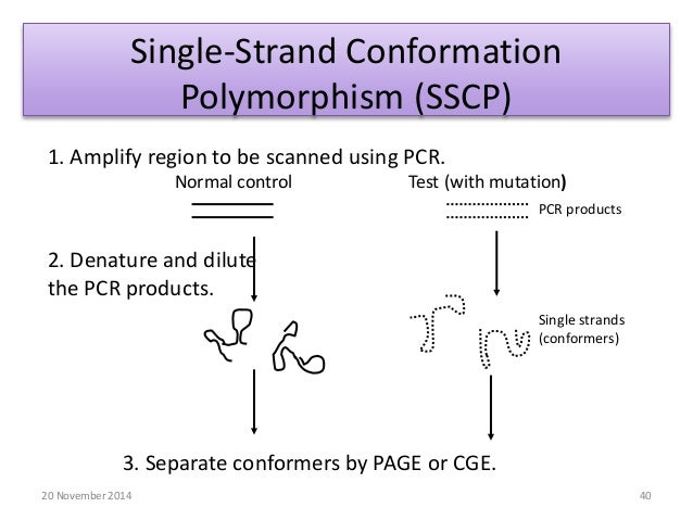 Single Strand Conformation