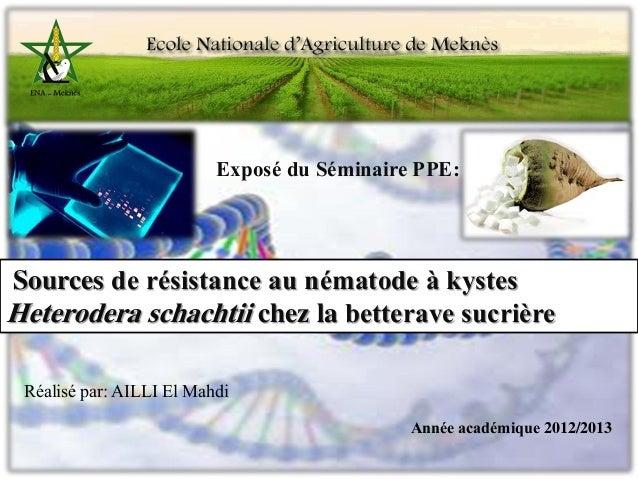Sources de  resistance aux nématodes à kyste Heterodera schachtii chez la betterave sucrière