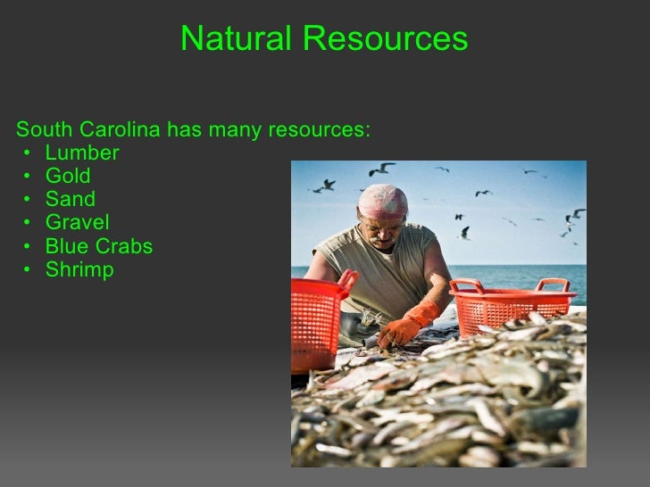 What Are Some Natural Resources In South Carolina