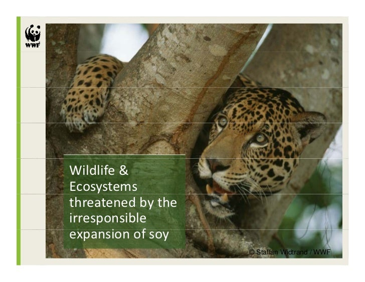 Wildlife & Ecosystems threatened by the irresponsible expansion of soy       i    f                     © Staffan Widtrand...