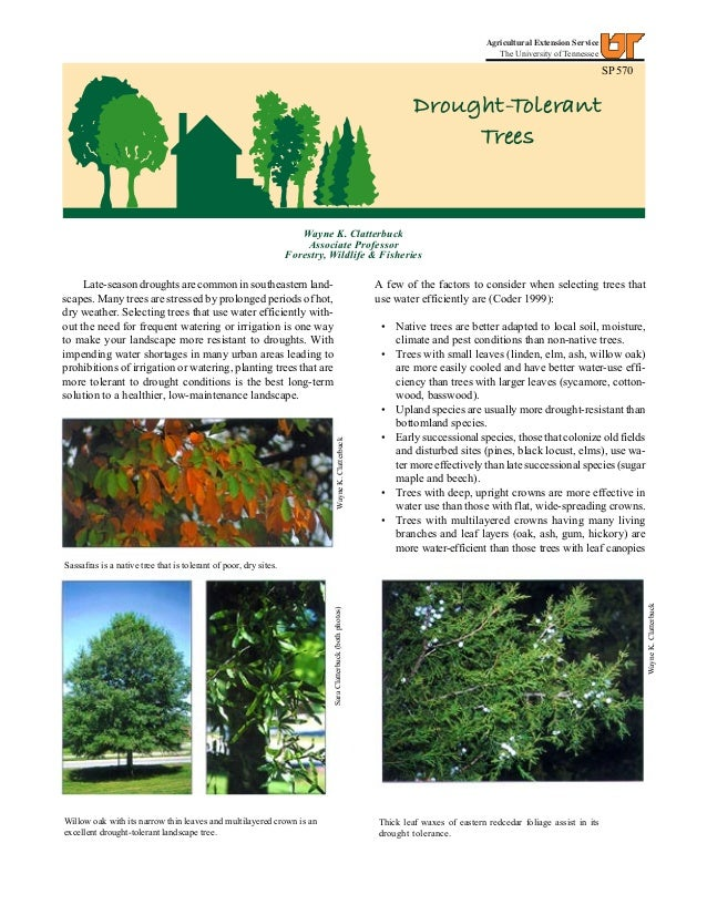 Drought-Tolerant Trees - University of Tennessee