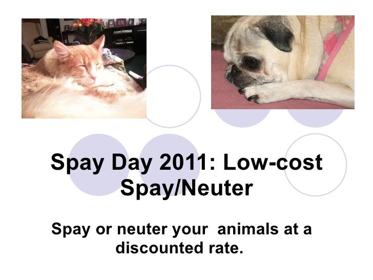 Spay Day 2011: Low-cost Spay/Neuter Spay or neuter your  animals at a discounted rate.