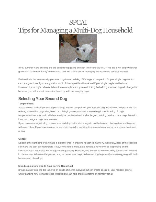 SPCAI TipsforManagingaMulti-DogHousehold If you currently have one dog and are considering getting another, think carefull...