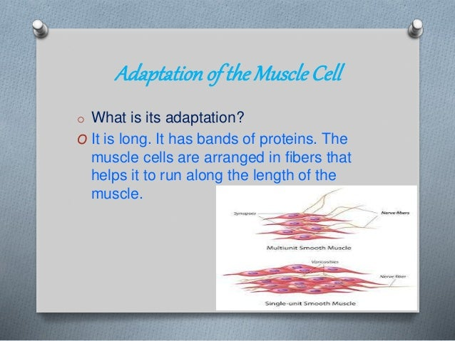 nerve cell specialization and adaptations Best answer: nerve cells have several adaptations to their function the basic function of the cell is do deliver a message to the next nerve cell in order to send information across the body the ways in which it is adapted to do this are as follows: - long axon so can deliver an action potential a long.