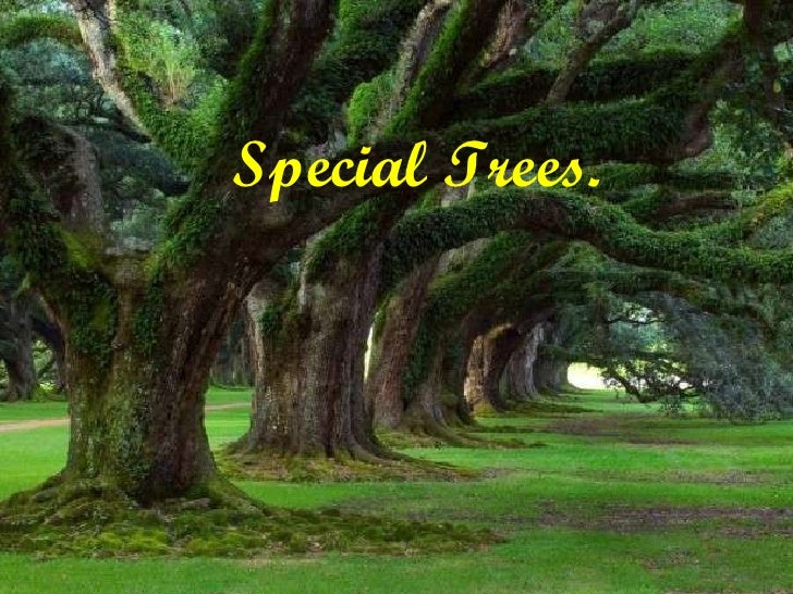 Special Trees.
