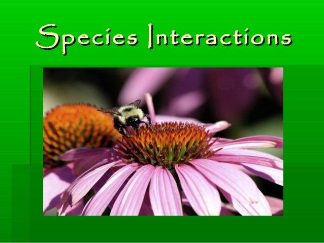 Species InteractionsSpecies Interactions