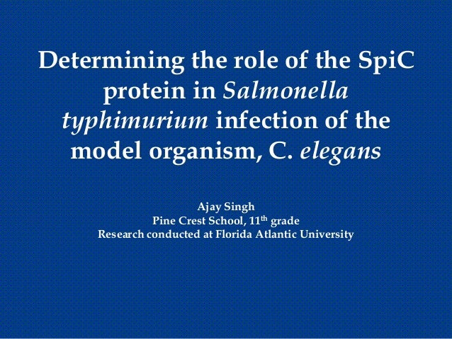 Determining the role of the SpiC     protein in Salmonella typhimurium infection of the  model organism, C. elegans       ...