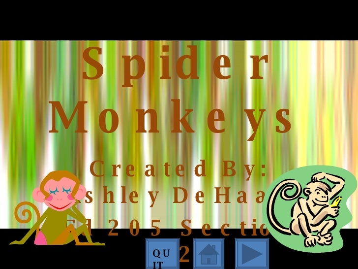 Spider Monkeys Created By: Ashley DeHaan Ed 205 Section 02 QUIT