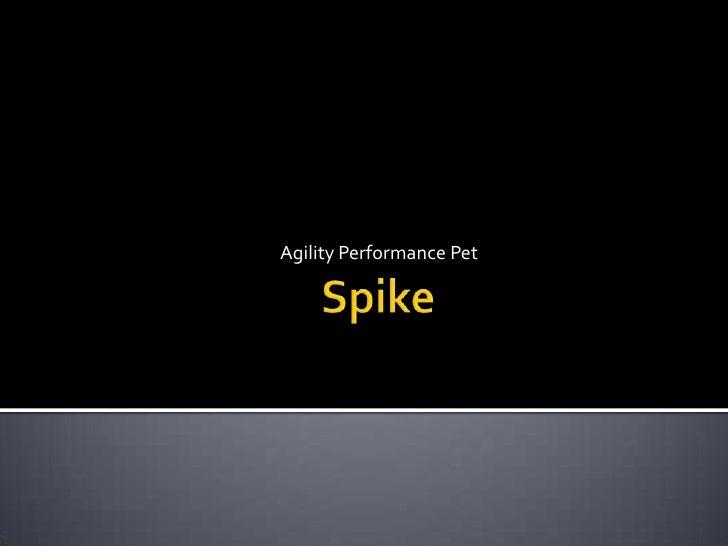 Agility Performance Pet