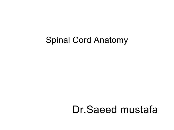 Spinal Cord Anatomy      Dr.Saeed mustafa