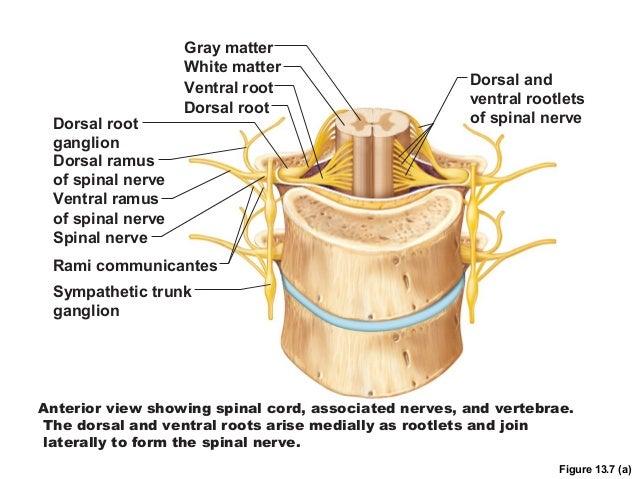 interlaminar epidural steroid injection for neck pain
