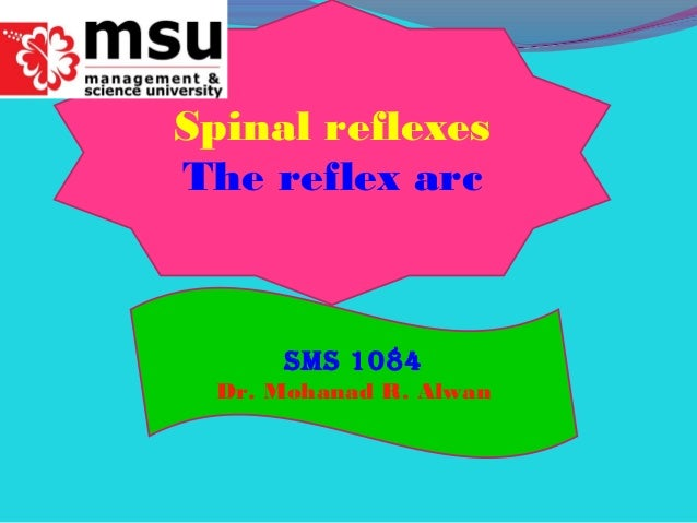 Spinal reflexes The reflex arc SMS 1084 Dr. Mohanad R. Alwan