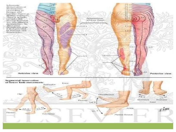 symptom of low testosterone