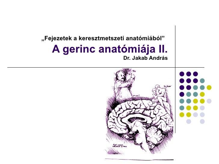 Fejezetek a keresztmetszeti anatómiából - 2. A gerinc anatómiája