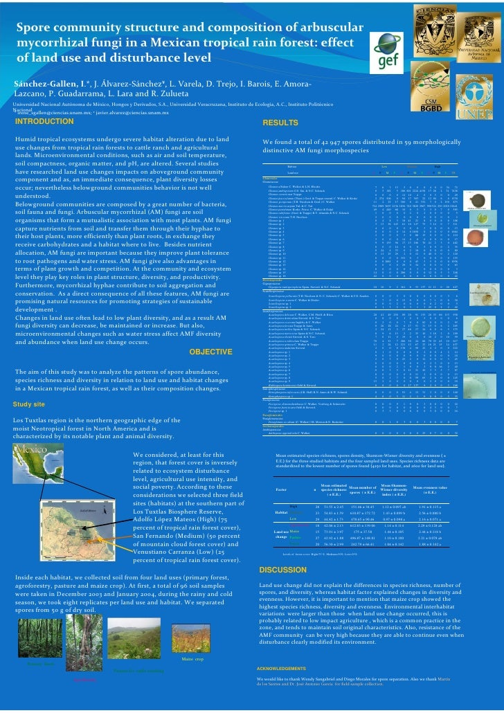 Spore community structure and composition of arbuscular mycorrhizal fungi in a mexican tropical rain forest effect of land use and disturbance