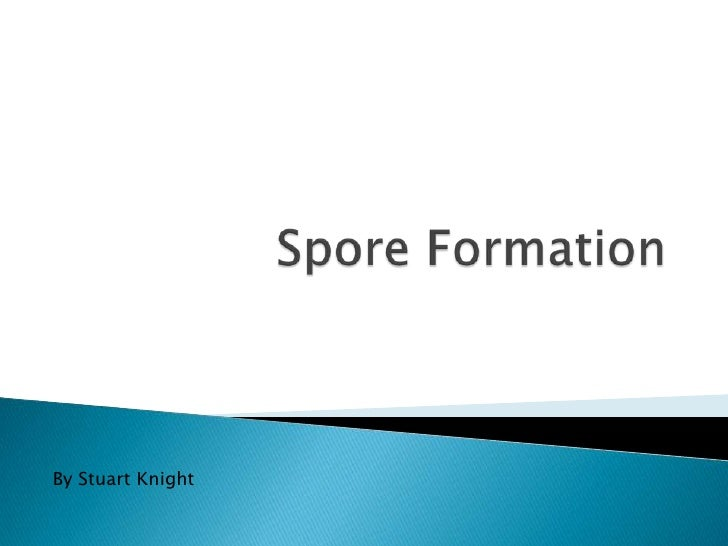 Spore Formation<br />By Stuart Knight<br />