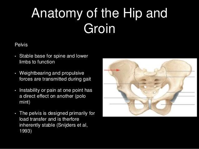 Anatomy hip pain