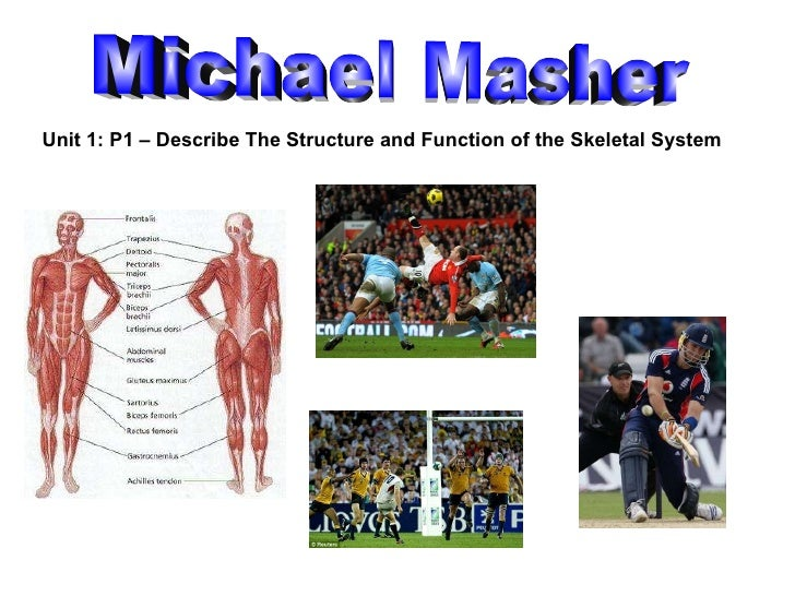 Michael Masher Unit 1: P1 – Describe The Structure and Function of the Skeletal System