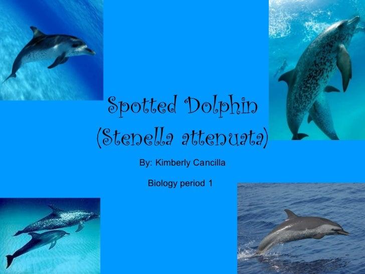 Spotted Dolphin (Stenella attenuata) By: Kimberly Cancilla Biology period 1