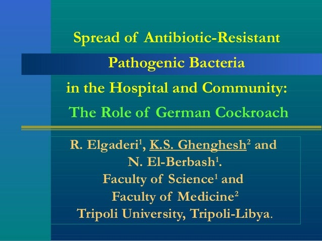 Spread of Antibiotic-Resistant Pathogenic Bacteria in the Hospital and Community: The Role of German Cockroach R. Elgaderi...