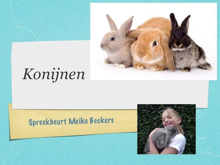 Spreekbeurt Meike konijnen groep 4