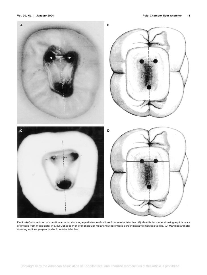 Journal Of Clinical Anatomy 5760055 Togelmayafo