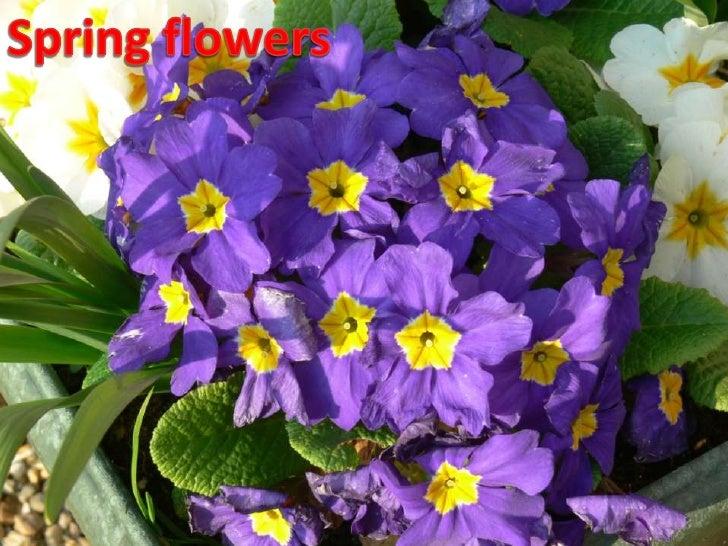 Spring flowers<br />