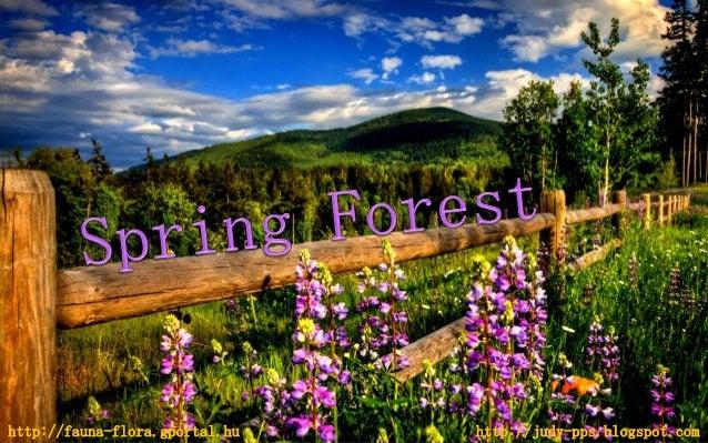 http://fauna-flora.gportal.hu http://judy-pps.blogspot.com