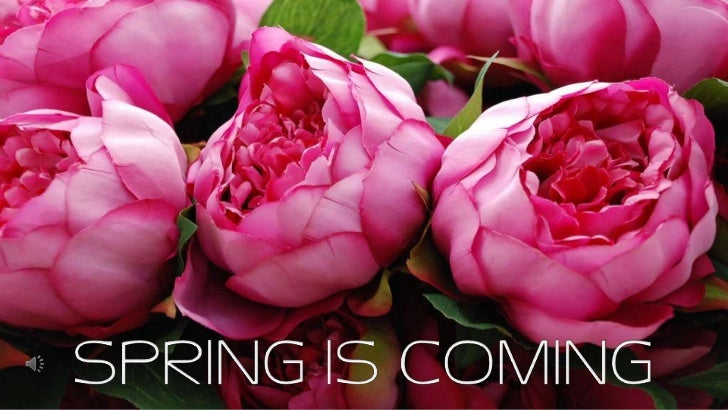 SPRING IS COMING<br />