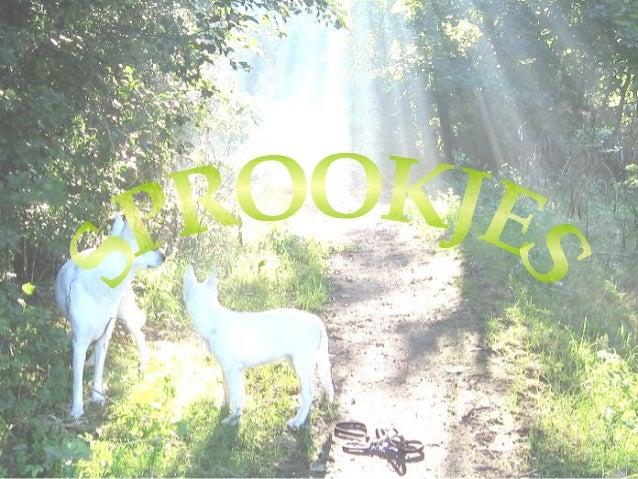 Over sprookjes • Een sprookje is een kort volksverhaal met veel onnatuurlijke elementen • Het sprookje bevat een les of mo...
