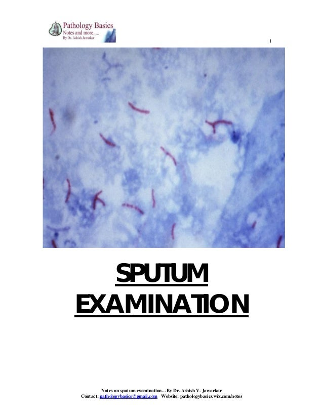1  SPUTUM EXAMINATION  Notes on sputum examination…By Dr. Ashish V. Jawarkar Contact: pathologybasics@gmail.com Website: p...