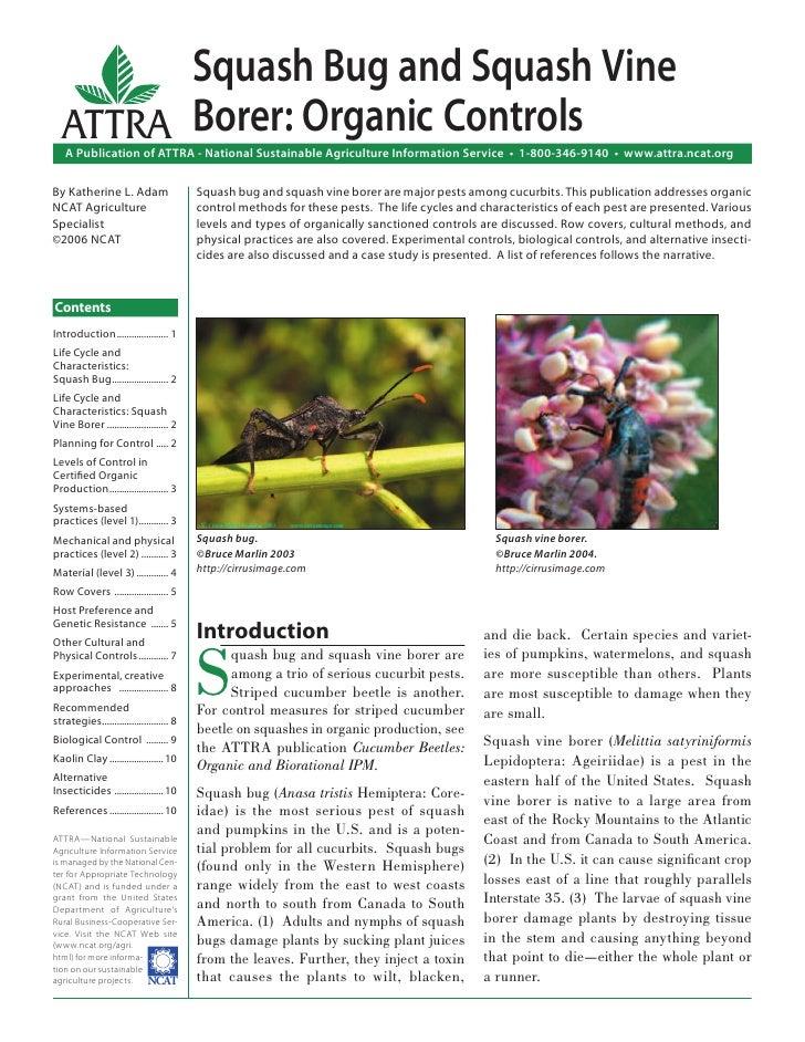 Squash Bug and Squash Vine Borer: Organic Controls