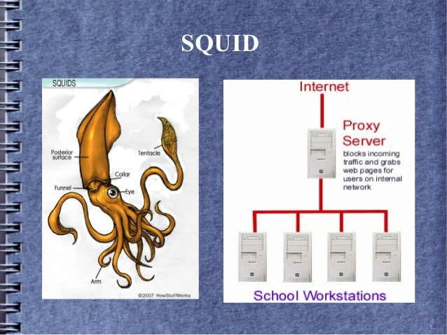 Squid Caching for Web Content Accerlation