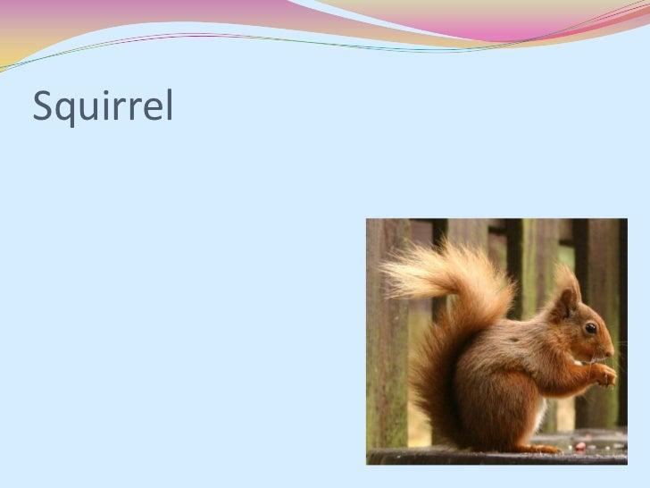 Squirrel powerpoint