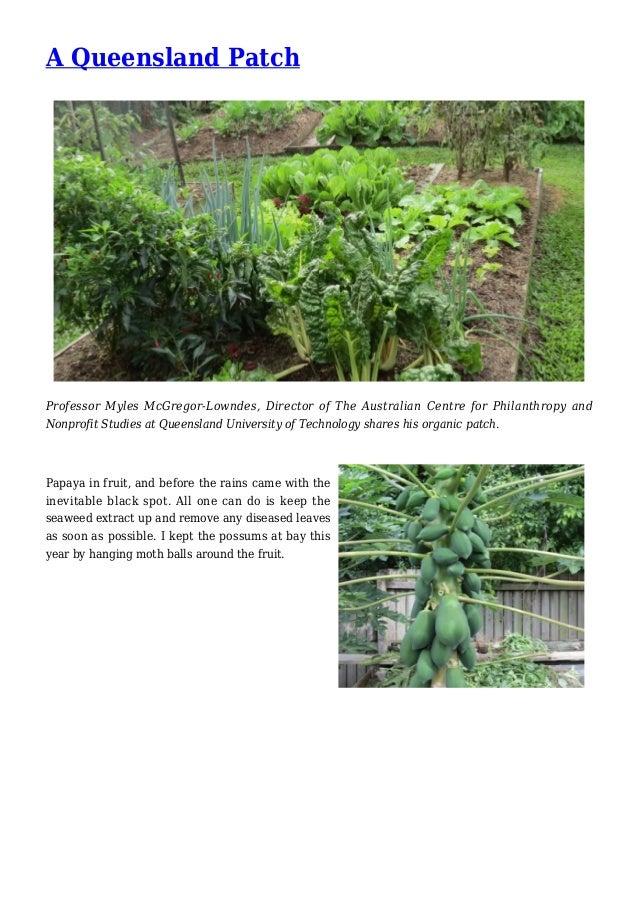 A Queensland Patch Garden