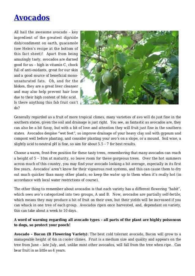 Avocados Gardening