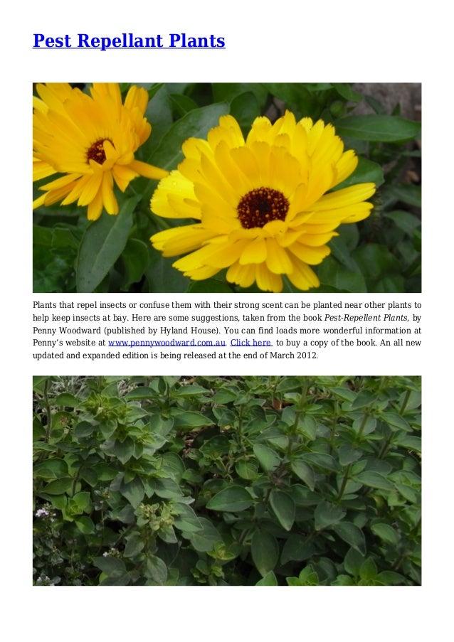 Pest Repellant Plants