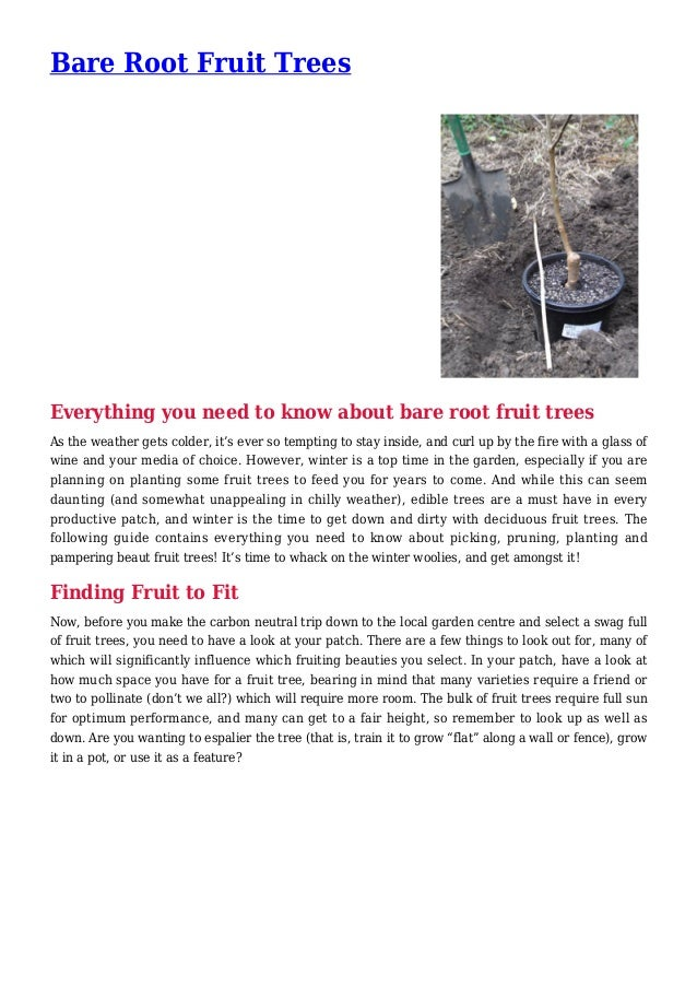 Bare Root Fruit Trees Everything you need to know about bare root fruit trees As the weather gets colder, it's ever so tem...